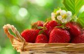 Плодовые и ягодные растения